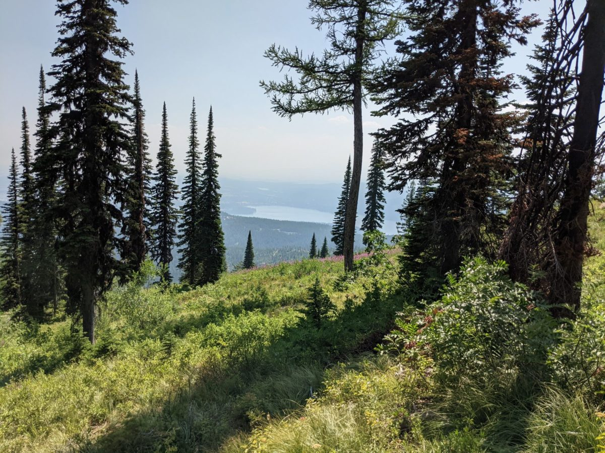 View from Big Mountain in Whitefish, MT